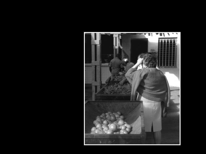 Cuba 84